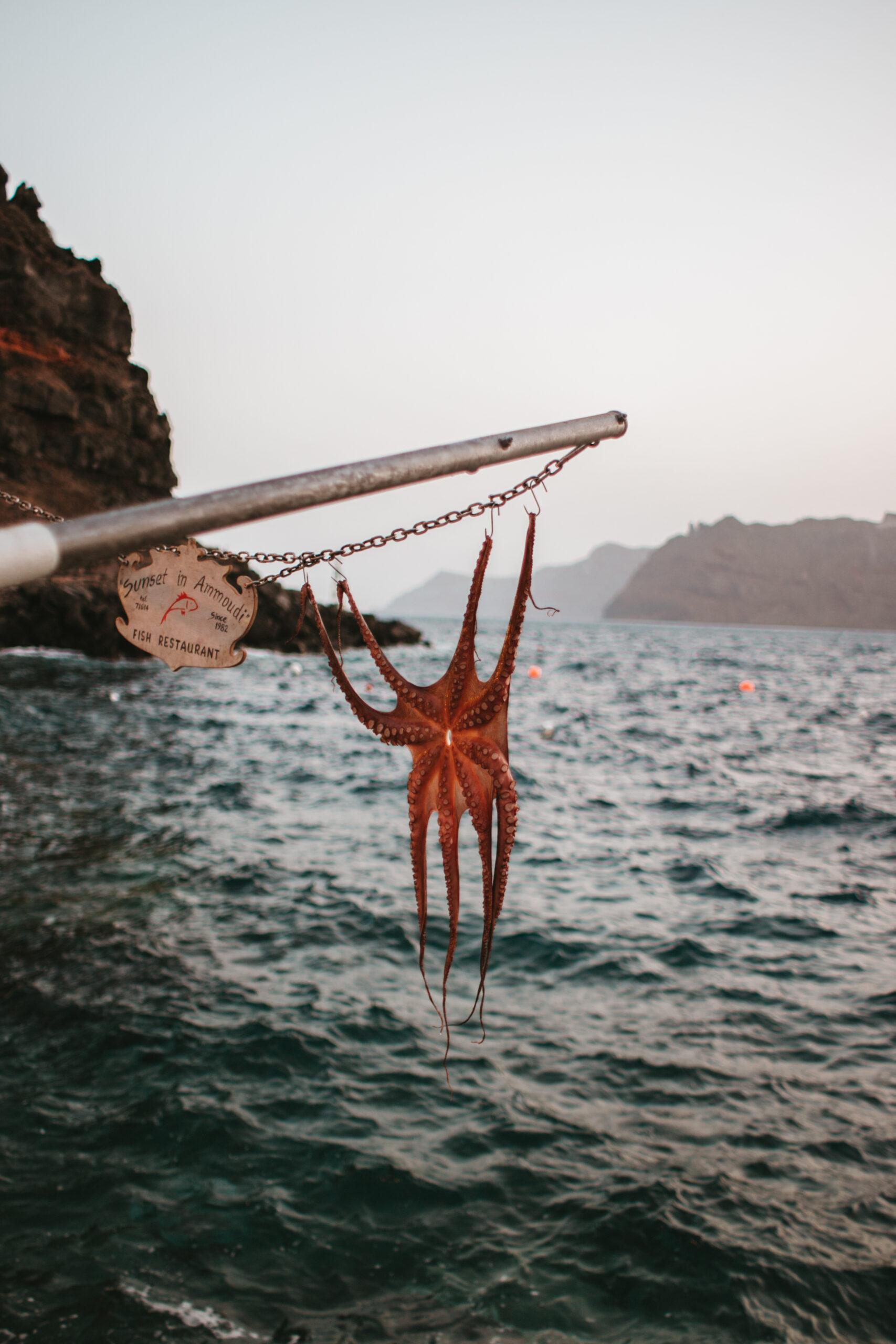 seafood, owoce morza santorini, ośmiornica, ammoudi bay, oia